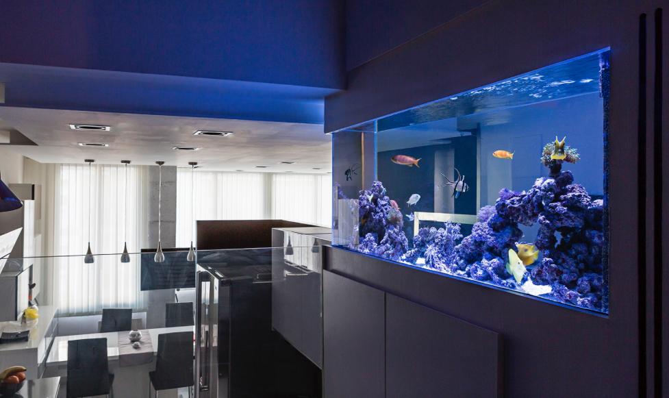BCN aquaris