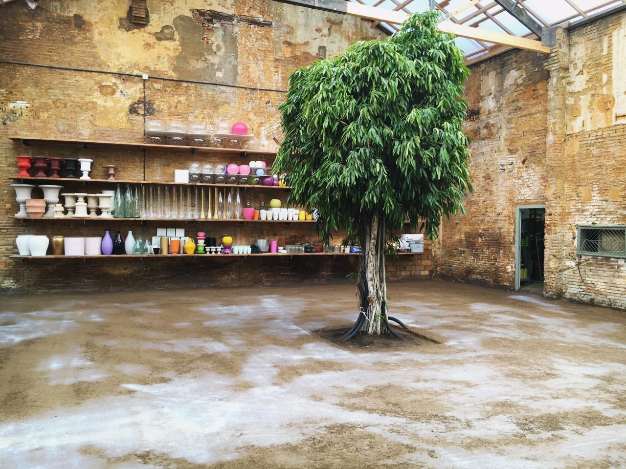 El antiguo Hivernacle de Sants se vuelve a llenar de vegetación 1